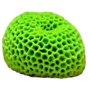 Blue Ribbon Pet Products Ornament   Mini Brain Coral Green